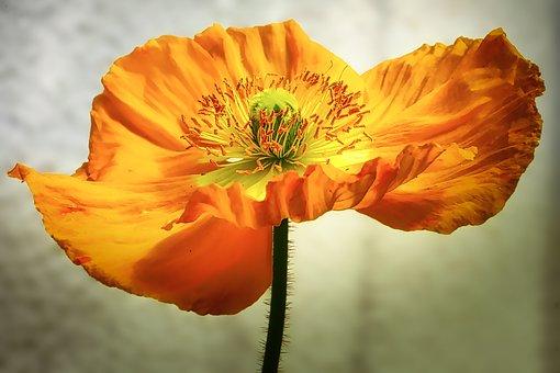 flower-3204958__340