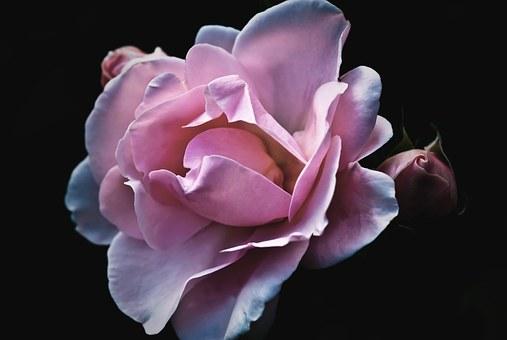 roses-56702__340 - Copy (2)