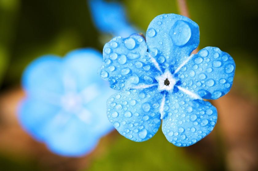 flower-2197679_1920