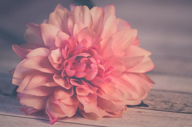 flower-3061523_1920