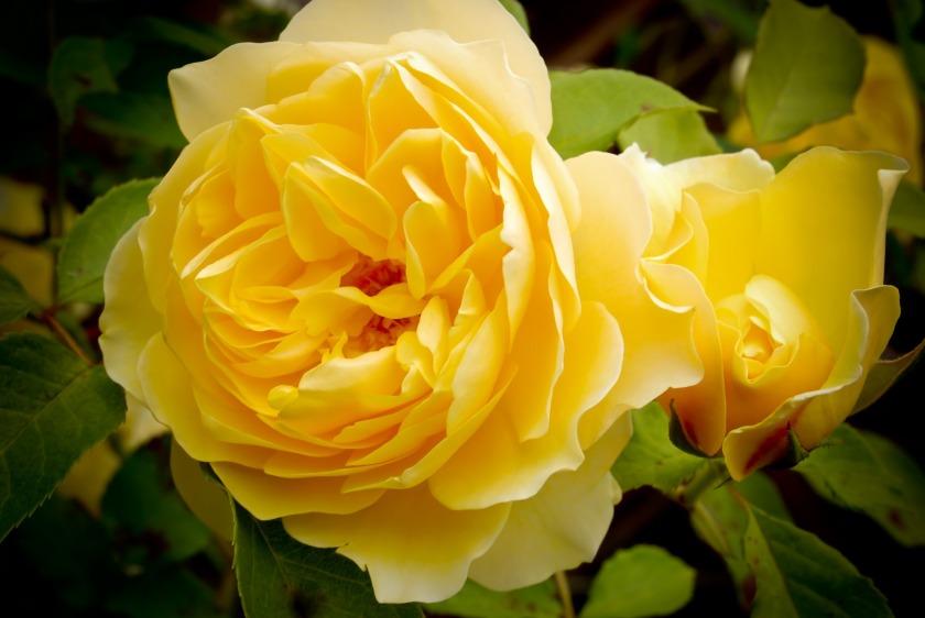 flower-3123770_1920