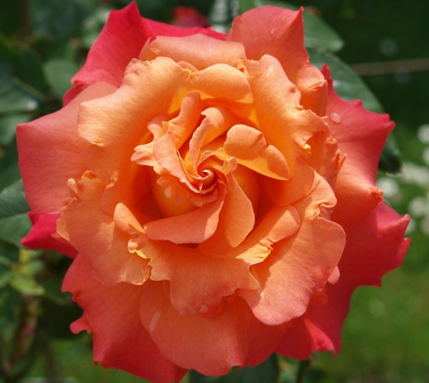 flower-3130183_1920